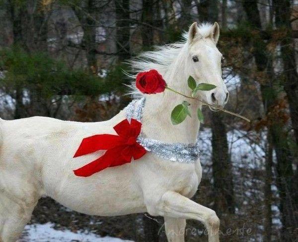 Rsultat de recherche dimages pour cheval blanc rose et femme en blanc